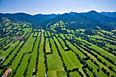 High angle view of rows of trees in the sunlight, Province of Bad Toelz, Upper Bavaria, Germany, Europe