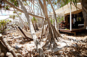 Luxury tent on stilts and hammock right at the beach under Pandanus trees, Wilson Island Resort, Wilson Island, part of the Capricornia Cays National Park, Great Barrier Reef Marine Park, UNESCO World Heritage Site, Queensland, Australia