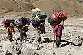 Area, Asia, Asian, Baggage, Bearer, Carry, Carrying, Cultural Heritage, Equipment, Footpath, Glacier, Group, Hard, Himalayas, Ice, Incumbrance, Khumbu Himal, Load, Man, Mount Everest, Mountain, Mountaineer, National Park, Nature, Nepal, People, Rock, Saga