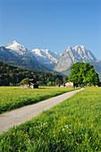 Track leading through meadow with flowers and hay sheds in front of Alpspitze, Zugspitze range and Waxenstein, Garmisch-Partenkirchen, Wetterstein range, Werdenfels, Upper Bavaria, Bavaria, Germany, Europe