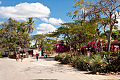Agaves and bougainvilleas, La Boca, near Trinidad, Sancti Spiritus, Cuba