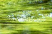 Deciduous trees, Bavaria, Germany