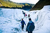 NEW ZEALAND, Westland, Westland National Park Tourists on a guided day hike exploring the Fox Glacier