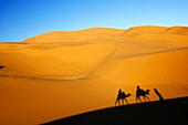 Morocco, Central Morocco, Merzouga Camels, tourists and guides shadows are cast on the dunes of the Erg Chebbi in the Sahara Desert