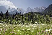 Gozd-Martuljek, Dolina, Slovenia / June Alpine pasture hay meadow with wild flowers and peaks of Martuljek mountain range beyond in Triglav National Park in Julian Alps in summer