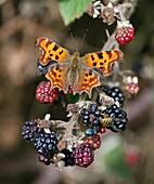 Comma Polygonia c-album butterfly on a Common Blackberry Rubus fruticosus bush