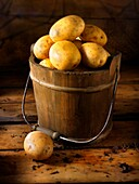 all, food, fresh, natural, organic, Potato, root, Studio shot, uncooked, unpeeled, vegetables, vertical, whole, YL2-1201616, AGEFOTOSTOCK