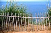 Drift Fence & Sea Oats atop Sleeping Bear Dunes near Traverse City, Michigan, USA. The dunes are part of a National Seashore and can be seen from outer space with the naked eye. They rise over 400 feet above Lake Michigan.