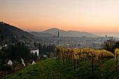 View from a vineyard over Freiburg im Breisgau, Baden-Wurttemberg, Germany