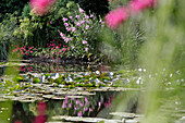 The White Water Lily Pond in the Impressionist Painter Claude Monet's Water Garden, Giverny, Eure (27), France