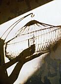Shadow of hands opening birdcage