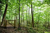 Footpath leading through woods blocked by shut gate