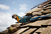 Brightly colored parrot on roof