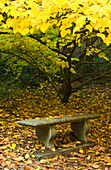 Stone Bench Underneath Yellow Autumn Leaves in Park, Seattle, Washington, USA