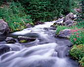 Blurred Stream in Remote Forest, Washington, USA