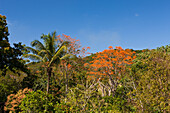 Huegellandschaft im Hinterland, Punta Rucia, Dominikanische Republik