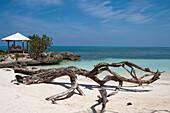 Driftwood on the beach and beach pavillion,  Playa Esmeralda, Guardalavaca, Holguin, Cuba