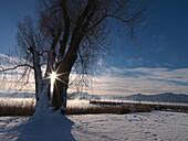 Winter scenery at lake Chiemsee, Gstadt am Chiemsee, Chiemgau, Bavaria, Germany