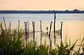 Achterwasser near Krummin, Usedom, Mecklenburg-Western Pomerania, Germany