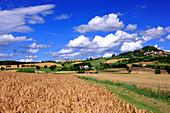 France, Auvergne, Puy de Dome, Usson, general view, wheat field