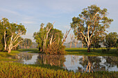 Paperbark Gums along Yellow Water, South Alligator River floodplain, Kakadu National Park,  Northern Territory, Australia