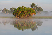 Misty morning along Yellow Water, South Alligator River floodplain, Kakadu National Park,  Northern Territory, Australia