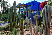 Morroco, City of Marrakesh, Majorelle Garden