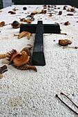 France, Paris, Père Lachaise graveyard.  All Saints' Day