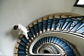 France, Paris, Staircase