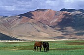 Inde, Ladakh, Chang Tang highlands in Ladakh