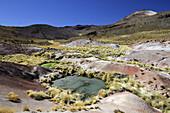 Chile, San Pedro de Atacama district, El Tatio, colored mud