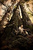 Man Sitting at Base of Tall Tree, Redwood National Park, California, USA