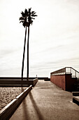 Palm Tree and Walkway on Beach, Venice Beach, California, USA