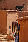 Kasbah Ait Benhaddou, mule or donkey standing on a flat roof of a shop, Ait Benhaddou, Atlas Mountains, South of the High Atlas, Morocco, Africa