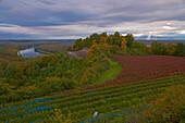 View from the Limberg at forest and river Rhine, Autumnal tint, Kaiserstuhl, Vogesen, Vosges, Oberrheinische Tiefebene, Baden Wuerttemberg, Germany, Europe