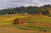 Weinberge bei Laufen, Herbst, Markgräflerland, Südschwarzwald, Schwarzwald, Baden-Württemberg, Deutschland, Europa