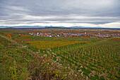 Autumn at Koenigschaffhausen, Autumn, Day, Kaiserstuhl, Vogesen, Vosges, Baden Wuerttemberg, Germany, Europe
