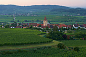View over vineyards from Burkheim at Oberrotweil, Summer, Kaiserstuhl, Baden Wuerttemberg, Germany, Europe
