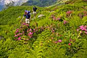 Two hikers passing blooming alp, Breitlauenen, Lauterbrunnen Valley, Canton of Bern, Switzerland