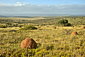 Landscape at Addo Elephant National Park, Eastern Cape, South Africa