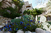 Old stone house, cacti in foreground, Labeaume, Ardeche, Rhone-Alpes, France