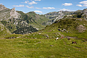 Grazing horses near Pic du Midi d'Ossau, Ossau Valley, French Pyrenees, Pyrenees-Atlantiques, Aquitaine, France