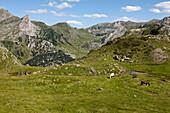 Pferde grasen am Pic du Midi d'Ossau, Ossautal, Französische Pyrenäen, Pyrénées-Atlantiques, Aquitaine, Frankreich