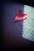 Heart-shaped petal