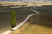 Landstrasse in einer Hügellandschaft, Crete, Toskana, Italien, Europa