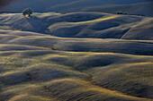 Hügellandschaft im Sonnenlicht, Crete, Toskana, Italien, Europa