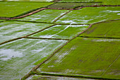 Overhead of rice and agricultural fields seen from Wat Tham Khao Noi, Khao Noi Cave Temple, near Kanchanaburi, Thailand