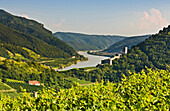 View over vineyards onto Hinerhaus ruins and Danube river, Wachau, Lower Austria, Austria, Europe