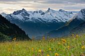 Flower meadow in front of Lechtal Alps, Hochtannbergpass, Vorarlberg, Austria, Europe