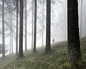 Person at foggy spruce forest, Salzburg, Salzkammergut, Austria, Europe